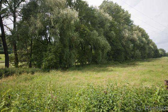 Erlen- und Eschen-Galeriewald (WEG, FFH 91E0), Nette bei Ildehausen