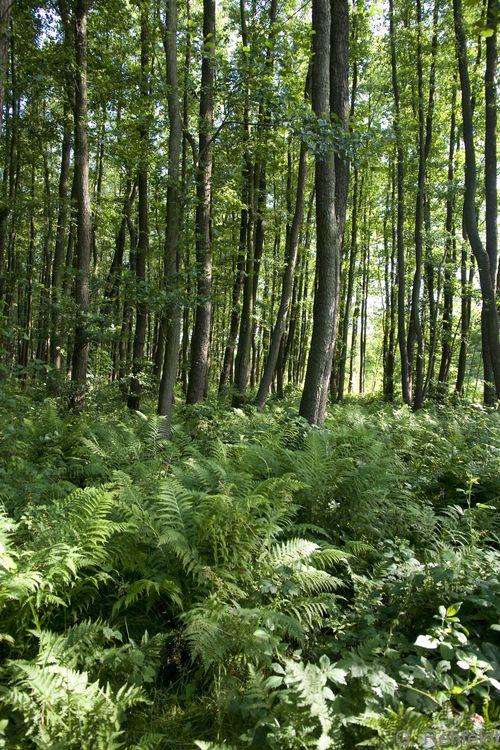 Sonstiger Erlen-Bruchwald nährstoffreicher Standorte (WARS), Edesse