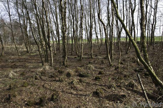 Birken-Bruchwald nährstoffreicher Standorte (WBRt), Emden