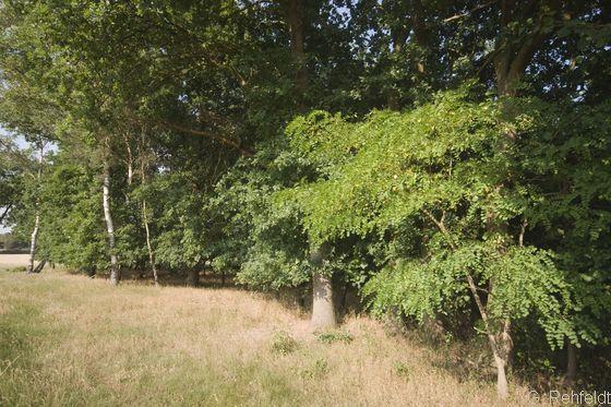 Waldrand magerer, basenarmer Standorte (WRA), Visbek