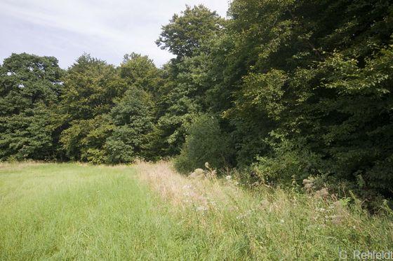 Waldrand mittlerer Standorte (WRM), Braunschweig