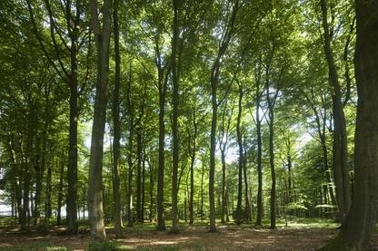 Bodensaurer Buchenwald lehmiger Böden des Tieflands (WLM, FFH 9110), Ebbingen