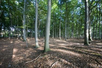 Bodensaurer Buchenwald lehmiger Böden des Tieflands (WLM, FFH 9110), Braunschweig