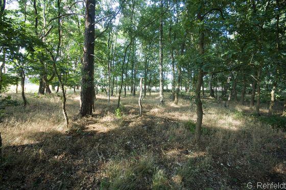 Eichen-Mischwald armer, trockener Sandböden (WQT, FFH9110), Visbek