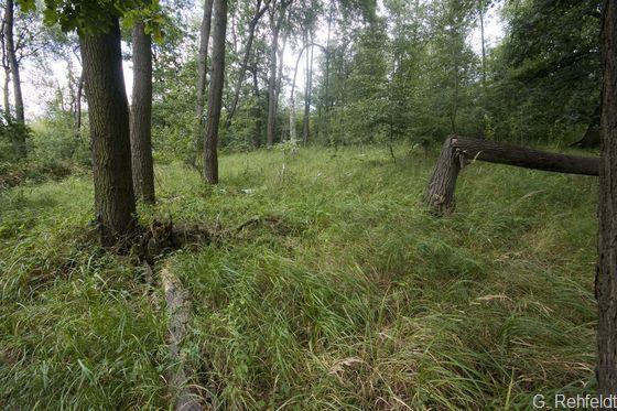 Bodensaurer Eichen-Mischwald nasser Standorte (WQN), Braunschweig