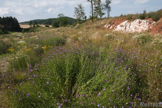 Gras- und Staudenflur trockener, basenreicher Standorte (UTK), Steinbruch Othfresen
