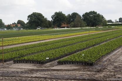 Gartenbaufläche mit Kräutern (EGG), Scharrel