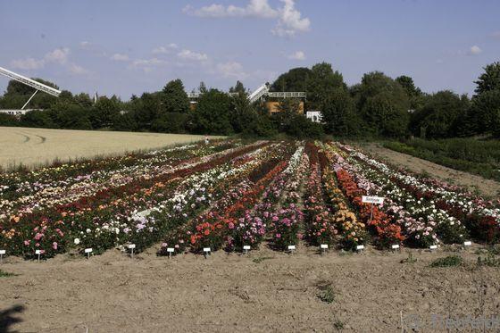 Blumen-Gartenbaufläche (EGB), Braunschweig