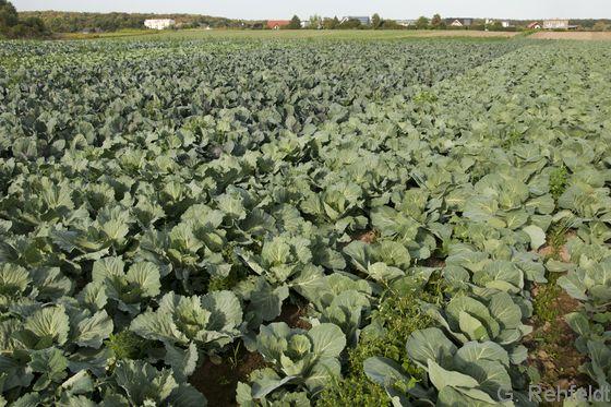 Gemüseanbaufläche (EGG), Wolfenbüttel