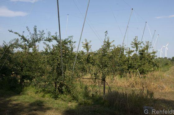 Spalierobst-Plantage (EOS), Gockenholz