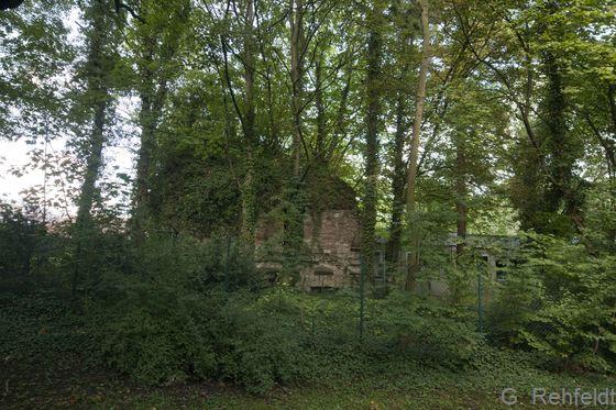 Siedlungsgehölz aus überwiegend einheimischen Baumarten (HSE), Wolfenbüttel