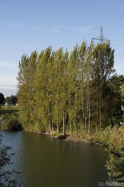 Baumgruppe des Siedlungsbereichs (HEB), Braunschweig