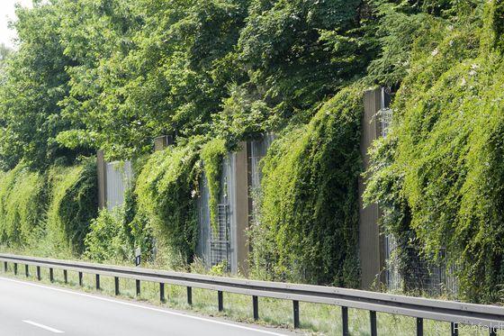 Bepflanzter Wall (OMP), Braunschweig