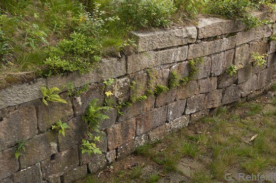 Natursteinmauer (OMN), Oderteich