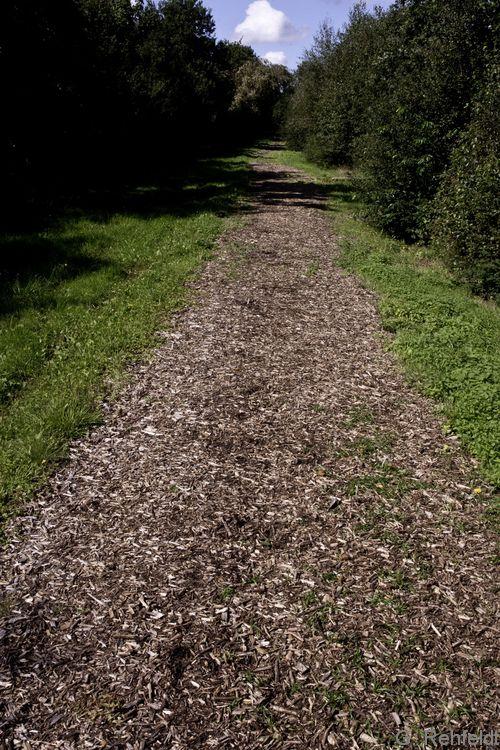 Weg, Rindenmulch (OVWz), Heede