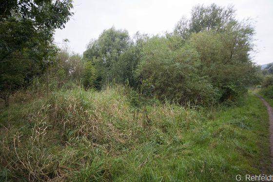 Sumpfiges Weiden-Auengebüsch (BAS), Ganspe