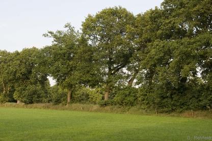 Strauch-Baum-Wallhecke (HWM), Strackholt