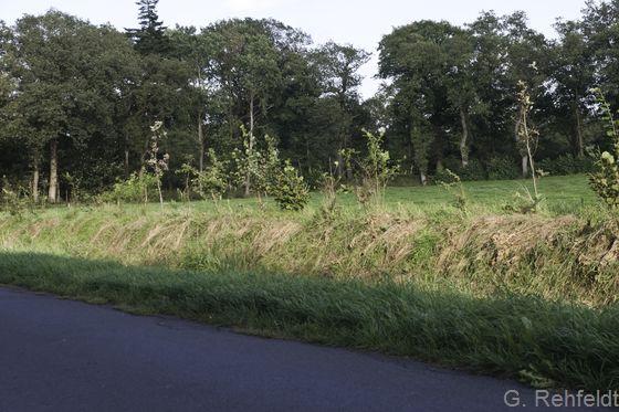 Neuangelegte Wallhecke (HWN), Holtland