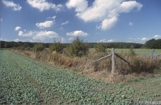 Neuangelegte Feldhecke (HFN), Salzgitter