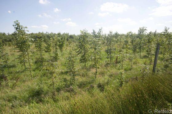 Standortgerechte Gehölzpflanzung (HPG), Emden