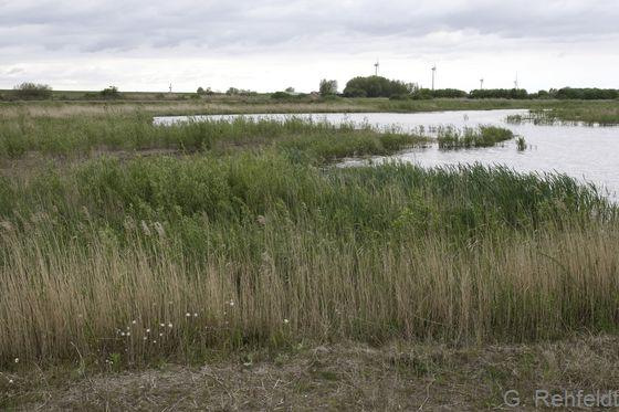 Naturnahes salzhaltiges Abgrabungsgewässer der Küste (KLA), Emden