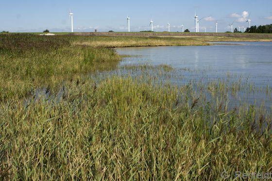 Brackwasserwatt mit Schilfröhricht (KWRP), Emden
