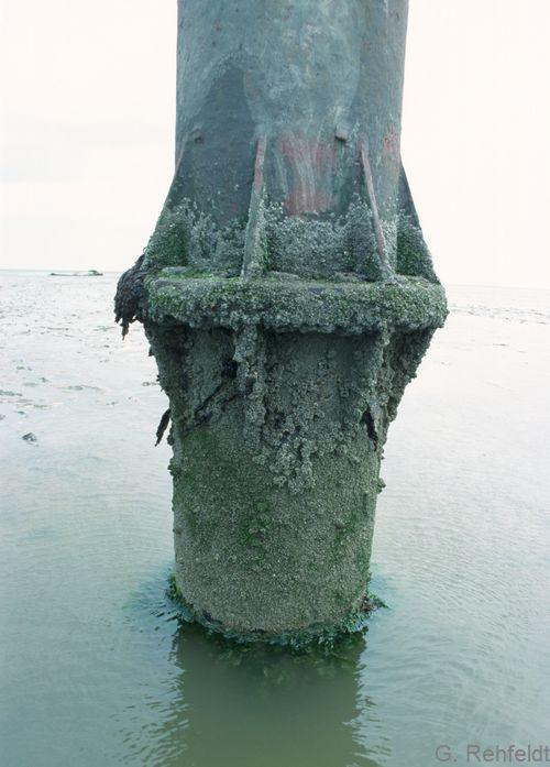 Sonstiges Hartsubstrat im Salz- und Brackwasser (KXS), Schillig