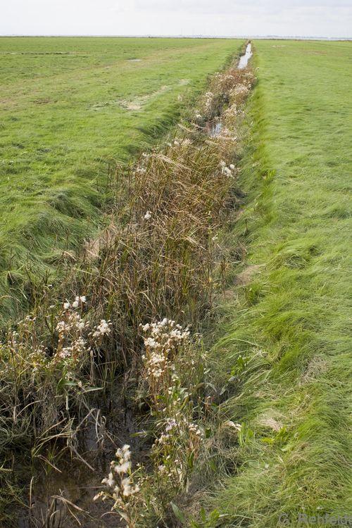 Brackwassergraben im Küstenbereich (KYG), Dyksterhusen