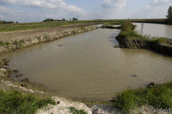 Naturfernes salzhaltiges Abgrabungsgewässer der Küste (KYA), Nüttermoor