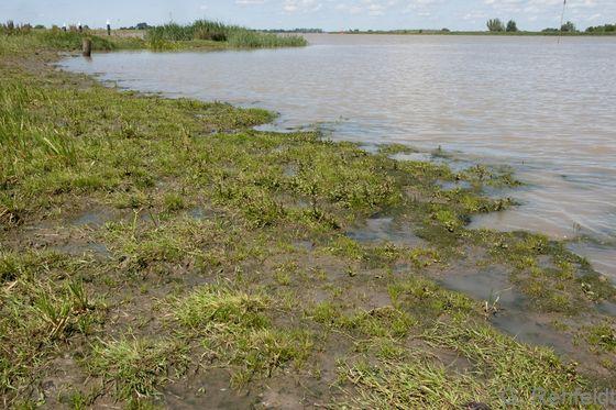 Süßwasserwatt mit Pioniervegetation (FWP), Leer