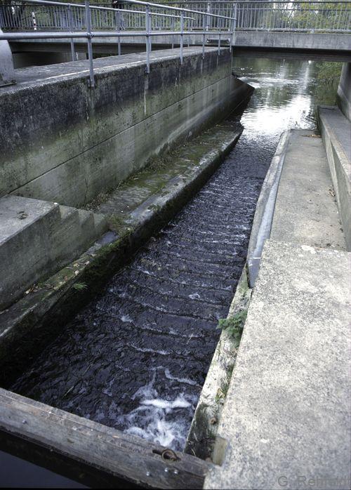 Querbauwerk in Fließgewässern mit Aufstiegshilfe (OQA), Oker Braunschweig