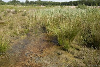 Sickerquelle in mäßig nährstoffreichem Sumpf (NSM/FQR), Klein Dörgen
