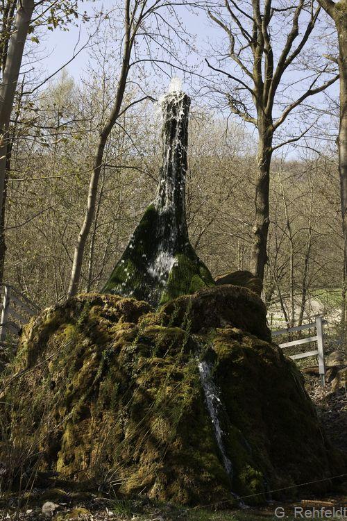 Sturzquelle (FQS), Wasserbaum bei Ockensen
