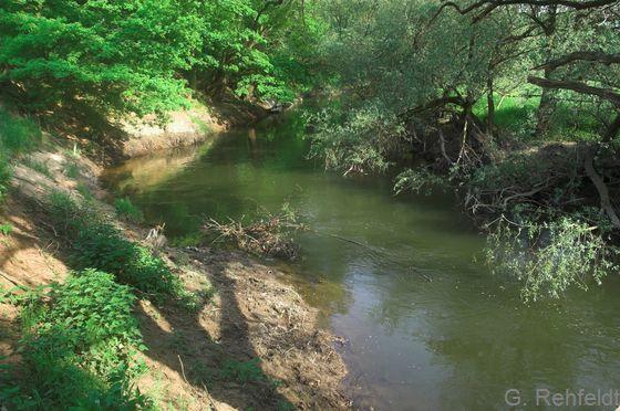 Naturnaher Tieflandfluss mit Feinsubstrat (FFF), Oker Braunschweig