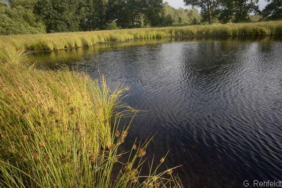Sonstiges naturnahes nährstoffarmes Kleingewässer (SOZ), Veenhusen