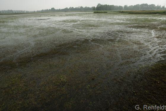 Sonstiges naturnahes nährstoffarmes Stillgewässer natürlicher Entstehung (SON), Emsbüren