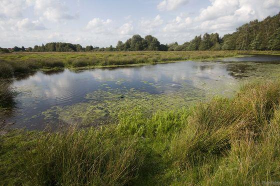 Naturnahes Altwasser (SEF), Haselünne