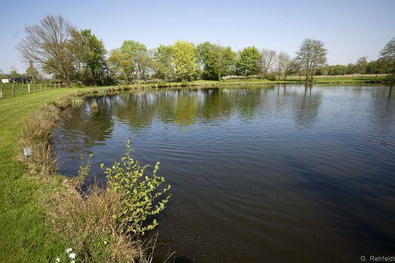 Naturnaher nährstoffreicher See/Weiher natürlicher Entstehung (SEN), Cloppenburg
