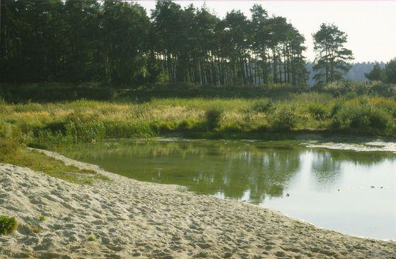 Naturnahes nährstoffreiches Abbaugewässer (SEA), Adenbüttel