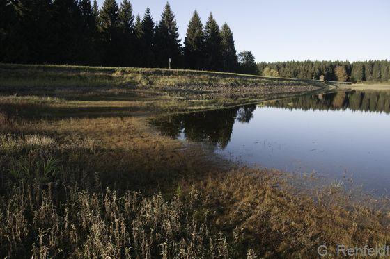 Nährstoffarme Pionierflur trockenfallender Stillgewässer mit Zwergbinsenvegetation (SPA), Clausthal-Zellerfeld
