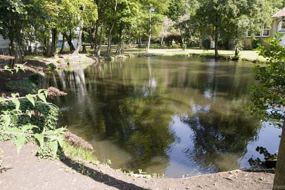 Sonstiges naturfernes Stillgewässer (SXZ), Löschteich Braunschweig