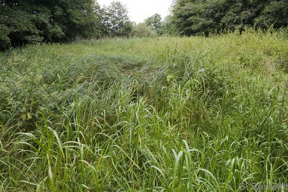 Sonstiger nährstoffreicher Sumpf (NSR), Braunschweig