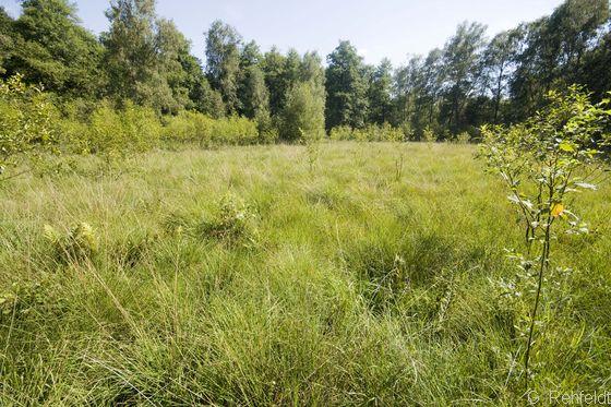Trockeneres Pfeifengras- Moorstadium (MPT), Vogelmoor Ehra