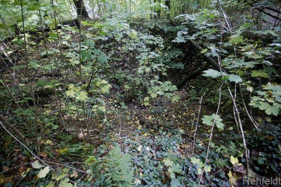 Natürlicher Erdfall in Kalkgestein (DEK, LRT 9180), Bad Grund