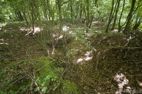 Sonstiger natürlicher Erdfall (DES), Scheppau