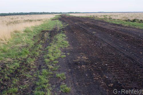 Sonstige vegetationsarme Torffläche (DTZ), Dahlum