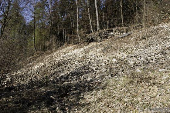 Natürliche Kalk-Schutthalde (RFH), Brunkensen
