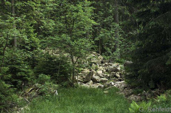Natürliche basenarme Silikatgesteinshalde (RBH), Oderteich