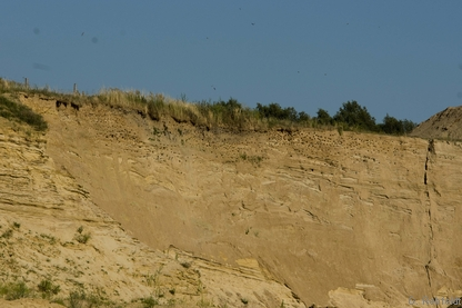 Sandwand (DSS), Weddel