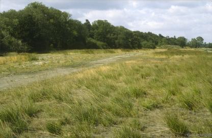 Magerer Pfeifengras-Rasen (RAP) auf Flussschotter, Langelsheim
